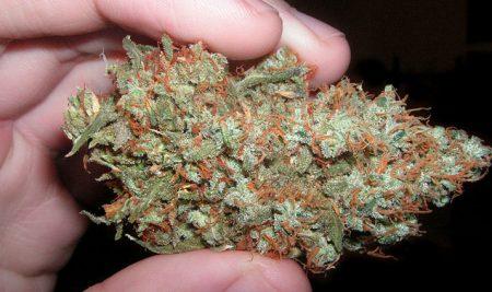 medical-marijuana-study-450x267