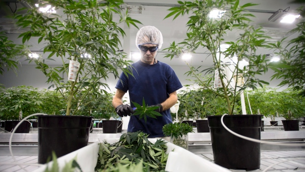 More-workers-testing-positive-for-marijuana
