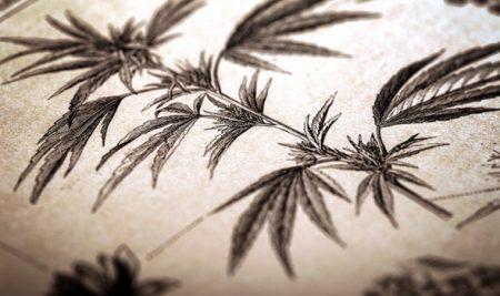 marijuana-450x267