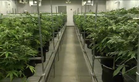 5532254_091119-wls-marijuana-sellers-generic-img-450x267